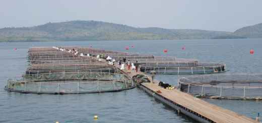 Przyjazna dla środowiska hodowla ryb