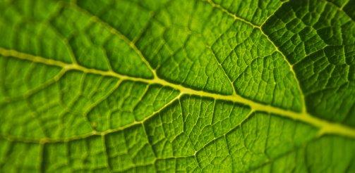 Bio-rozwiązania dla przemysłu