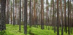 Ochrona lasów